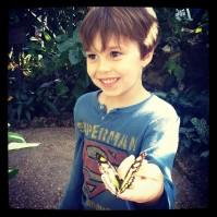 josh butterfly